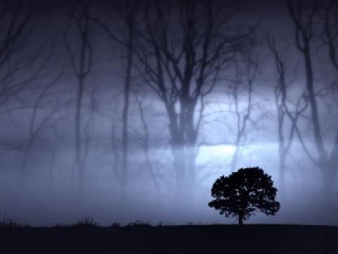 20060115045304-bosque2.jpg