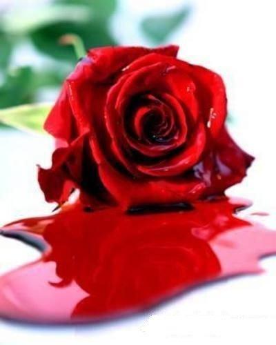 20070104020725-rose-blood.jpg