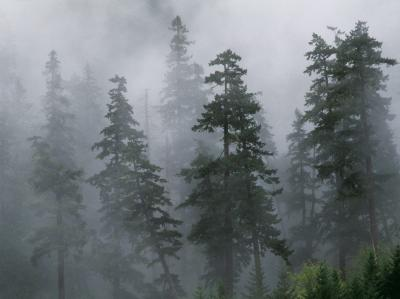 20070614015508-mist-of-the-clearing-storm-mount-hood-national-forest-oregon.jpg