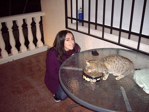 Jasper da cat