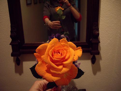 Rosa Día del Libro