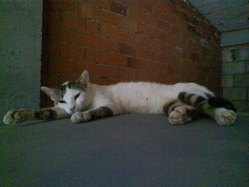 Gatito sobando