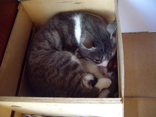 Mamá Gato (II)