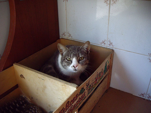 Mamá Gato (I)