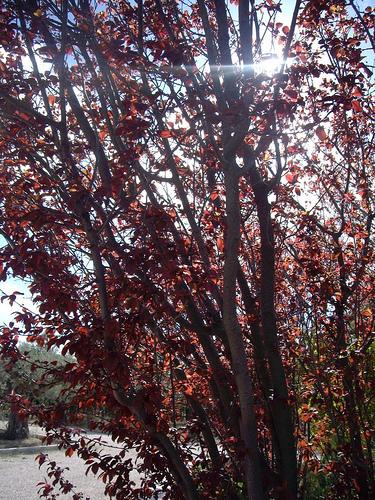 Rojo (I)
