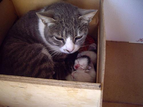 Mamá Gato (VI)